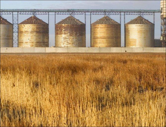 Kazakhstan agriculture grain